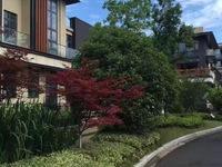 中联棠樾 双拼别墅560平方 院子 3车位 新空房 800万元