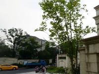 中昊檀宫别墅联排边户366平方豪华装修别墅888万元满两年
